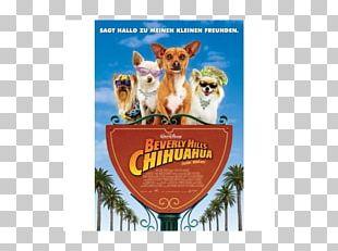 Beverly Hills Chihuahua 3: Viva La Fiesta! Film Cinema PNG