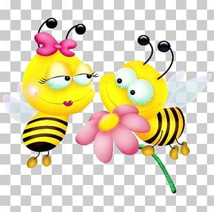 Western Honey Bee Insect Bumblebee Maya PNG