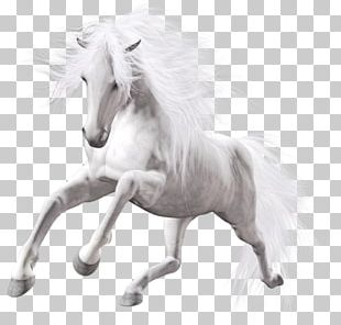 American Paint Horse Pony Stallion White Horse PNG