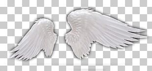 Feather Wing Angel PNG