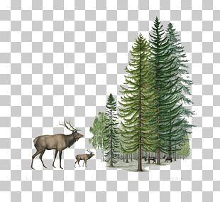 Reindeer Shulin District Sika Deer PNG