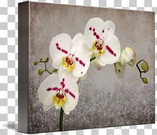 Moth Orchids Floral Design Gallery Wrap Cut Flowers PNG