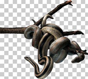 Snake Reptile TIFF PNG