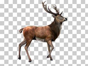 Deer PNG