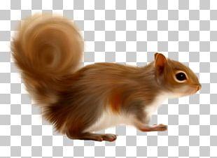 Gerbil Tree Squirrels PNG
