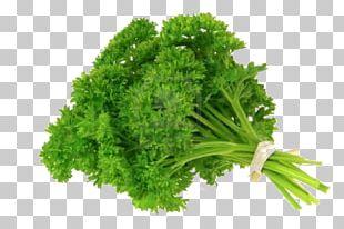 Parsley Organic Food Herb Vegetable PNG