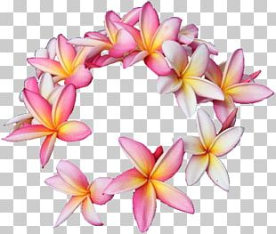 Hawaii Plumeria Rubra Cut Flowers Floral Design PNG