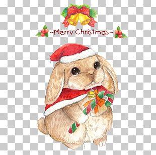 Christmas Eve The Magic Rabbit Cat PNG