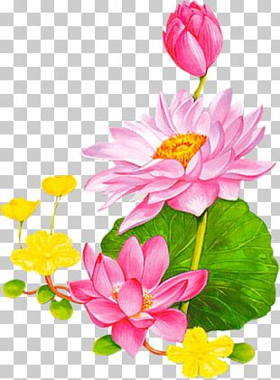 Flower Nelumbo Nucifera Animation Lotus 43 PNG