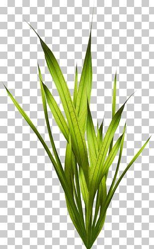 Coral Algae Seaweed Plant PNG