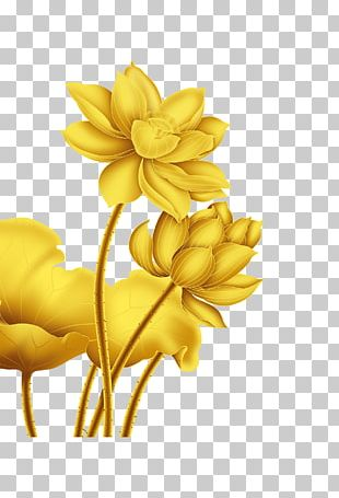 Gold Flower Nelumbo Nucifera PNG