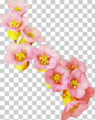 Cut Flowers Computer Icons PNG