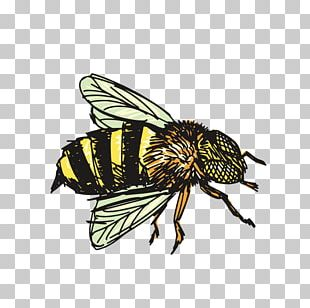 Insect Bee Drawing PNG