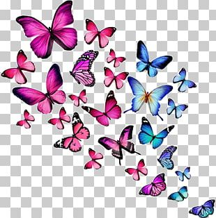 Butterfly Desktop Stock Photography PNG