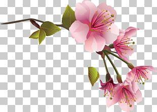 Flower Spring Magnolia PNG