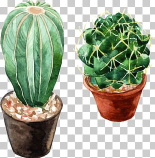 Watercolor: Flowers Cactaceae Watercolor Painting PNG