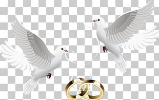 Wedding Invitation Wedding Cake Wedding Ring PNG