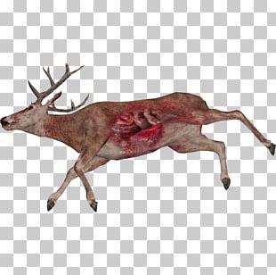 Reindeer White-tailed Deer Animal Elk PNG