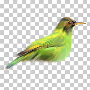 Bird Finch Green PNG