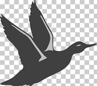 American Pekin Duck Bird Goose PNG