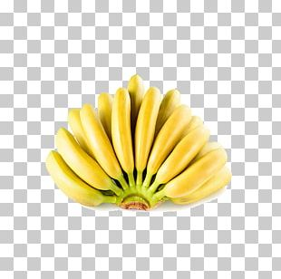 Ecuador Lady Finger Banana Fruit Banana Peel PNG