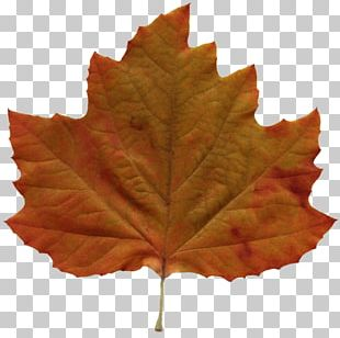 Autumn Leaf Color Amazing Autumn PNG
