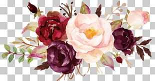 Cabbage Rose Garden Roses Peony Cut Flowers Floral Design PNG