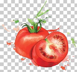 Watercolor Painting Food Art Illustration PNG