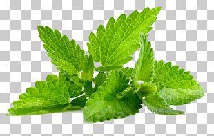 Mentha Spicata Patchouli Peppermint Flavor PNG