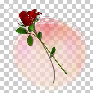 Valentine's Day Rose PNG