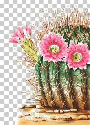 Wedding Invitation Paper Postcard Cactaceae Flower PNG