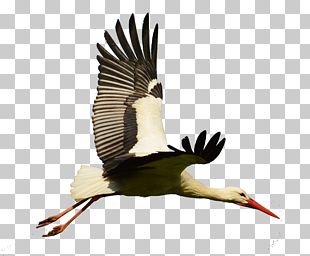 White Stork Bird Goose Flight PNG