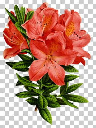Floral Design Flower Art Azalea PNG