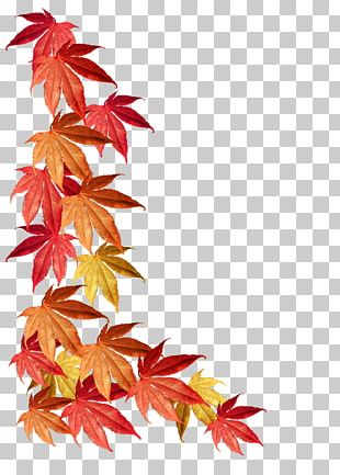 Borders And Frames Maple Leaf Autumn Leaf Color PNG