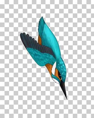 Beak Teal Bird Wing Feather PNG