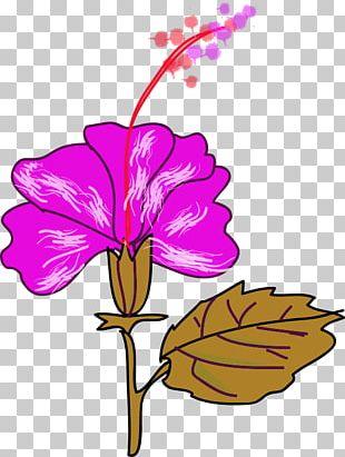 Flower Hawaiian Hibiscus Shoeblackplant PNG