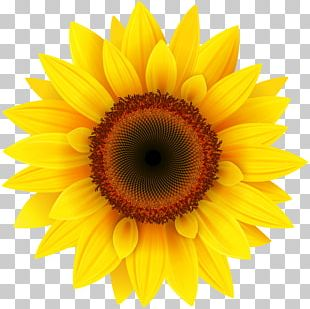 Common Sunflower Pixel XCF PNG