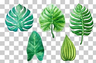 Leaf Watercolor Painting Drawing PNG
