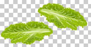 Spring Greens Lettuce Vegetable Food PNG