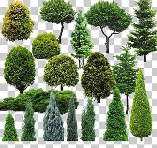 Tree Natural Environment PNG