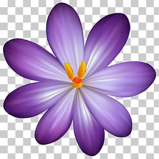 Flower Purple PNG