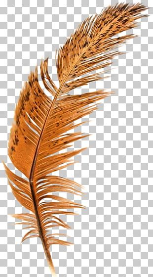 Feather Brown Quill PNG