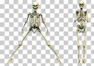 Human Skeleton Computer Icons PNG
