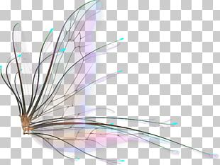 Fairy Wings Drawing PNG
