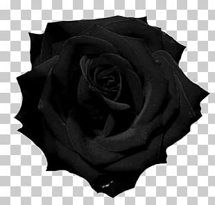 Black Rose Photography PNG