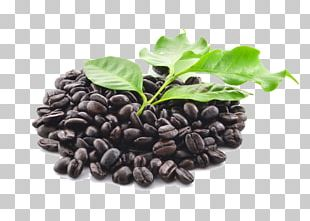 Coffee Bean Coffee Bean Starbucks Ingredient PNG