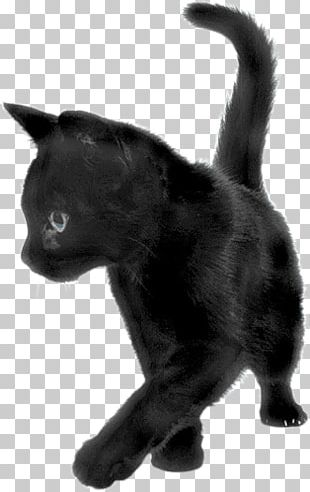 Black Cat Sideview PNG