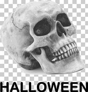 Calavera Skull Halloween Human Skeleton PNG