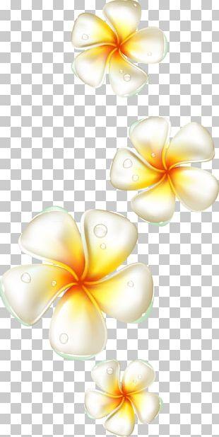 Flower Frangipani PNG