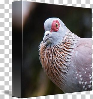 Beak Finches Galliformes Feather Close-up PNG